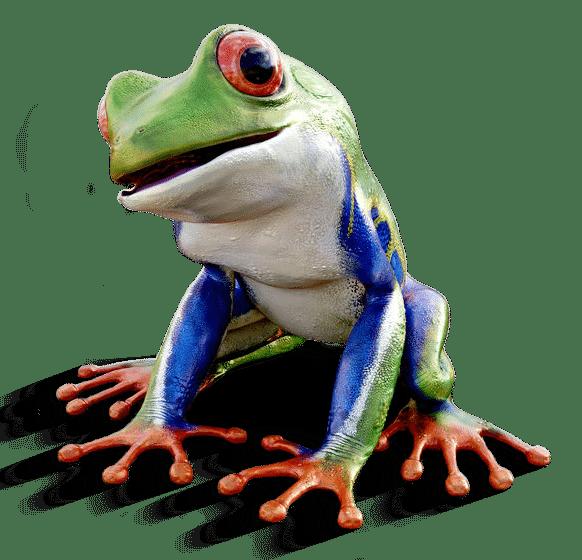 Marketing-Übersetzungen - Bunter Frosch