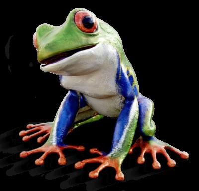 Frosch - Marketing-Übersetzungen