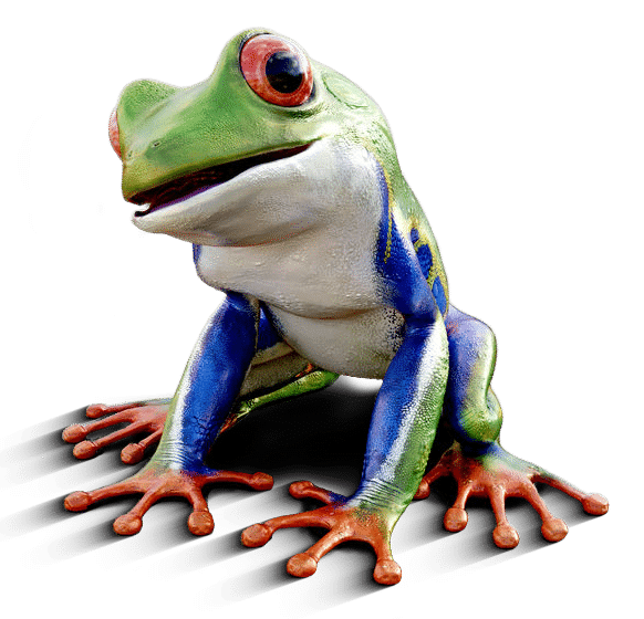 Bunter Frosch - Header